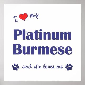 Amo mi birmano del platino (el gato femenino) poster