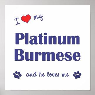 Amo mi birmano del platino (el gato masculino) impresiones