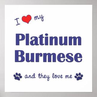 Amo mi birmano del platino (los gatos múltiples) posters