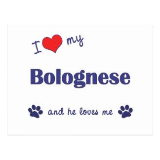 Amo mi boloñés (el perro masculino) tarjeta postal
