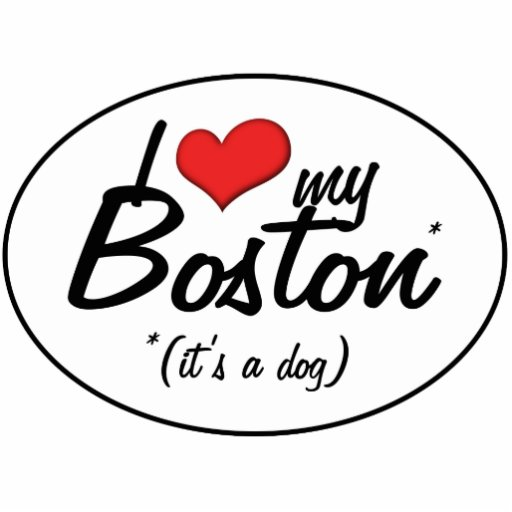 Amo mi Boston (es un perro) Esculturas Fotográficas