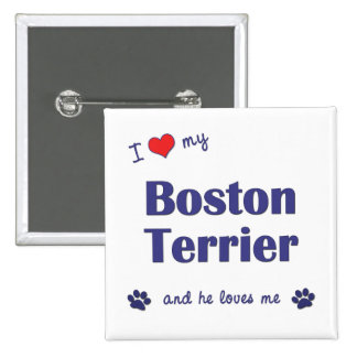 Amo mi Boston Terrier (el perro masculino) Pin Cuadrado