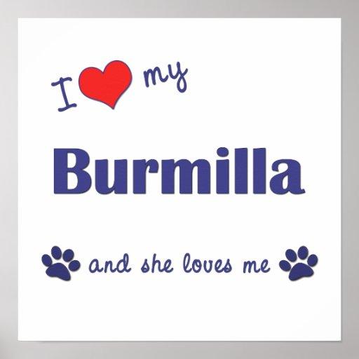 Amo mi Burmilla (el gato femenino) Poster