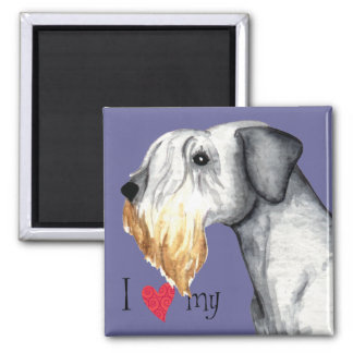 Amo mi Cesky Terrier Imán Cuadrado