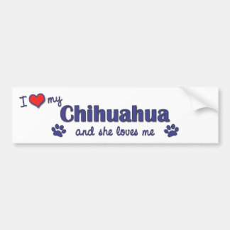 Amo mi chihuahua (el perro femenino) etiqueta de parachoque