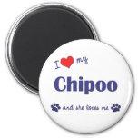 Amo mi Chipoo (el perro femenino) Imán De Frigorífico