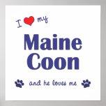 Amo mi Coon de Maine (el gato masculino) Impresiones