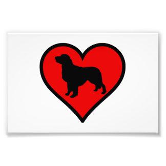Amo mi corazón de la silueta del perro del golden impresion fotografica