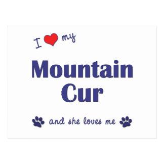 Amo mi Cur de la montaña (el perro femenino) Tarjeta Postal