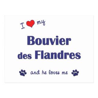 Amo mi DES Flandres (el perro masculino) de Tarjeta Postal