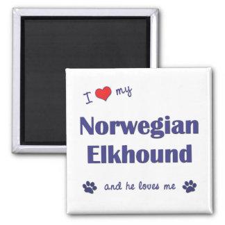 Amo mi Elkhound noruego (el perro masculino) Imán Para Frigorífico