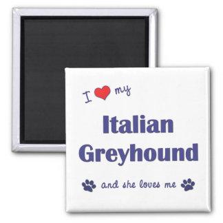 Amo mi galgo italiano (el perro femenino) imán cuadrado