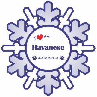 Amo mi Havanese (el perro masculino) Adorno Fotoescultura