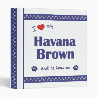 Amo mi La Habana Brown (el gato masculino)