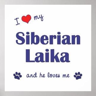 Amo mi Laika siberiano el perro masculino Posters