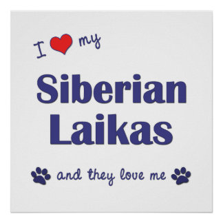 Amo mi Laikas siberiano los perros múltiples Impresiones