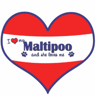 Amo mi Maltipoo (el perro femenino) Escultura Fotografica