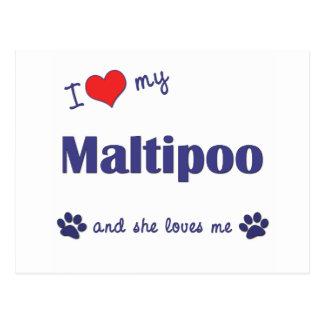 Amo mi Maltipoo (el perro femenino) Postal