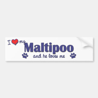 Amo mi Maltipoo (el perro masculino) Etiqueta De Parachoque