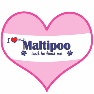 Amo mi Maltipoo (el perro masculino) Escultura Fotografica