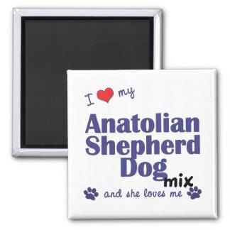 Amo mi mezcla de Anatolia del perro de pastor (el  Imán Cuadrado