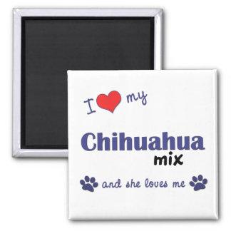 Amo mi mezcla de la chihuahua (el perro femenino) imán cuadrado