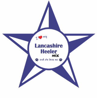 Amo mi mezcla de Lancashire Heeler (el perro femen Adorno Fotoescultura