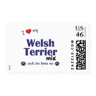 Amo mi mezcla de Terrier galés (el perro femenino)