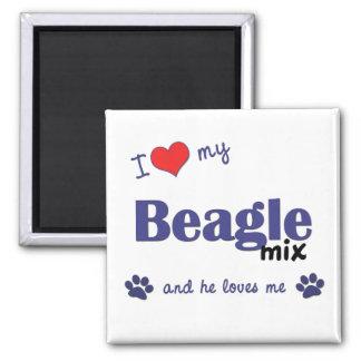 Amo mi mezcla del beagle (el perro masculino) imán cuadrado