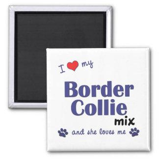 Amo mi mezcla del border collie (el perro femenino imán cuadrado