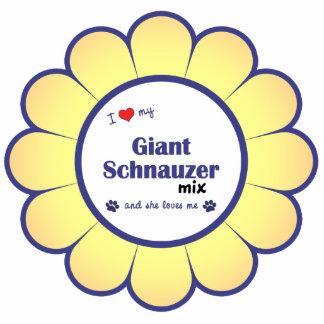 Amo mi mezcla del Schnauzer gigante el perro feme Esculturas Fotográficas