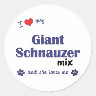 Amo mi mezcla del Schnauzer gigante el perro feme Etiqueta Redonda