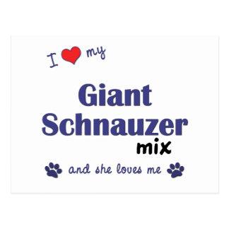 Amo mi mezcla del Schnauzer gigante el perro feme Tarjetas Postales