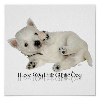 Amo mi pequeño perro blanco - perrito de Westie Poster