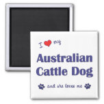 Amo mi perro australiano del ganado (el perro feme imanes