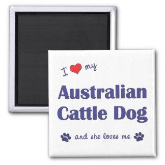 Amo mi perro australiano del ganado (el perro feme imán cuadrado