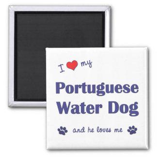 Amo mi perro de agua portugués (el perro masculino imán cuadrado