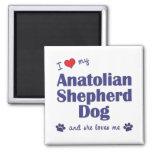 Amo mi perro de Anatolia de Shepher (el perro feme Imán Para Frigorifico