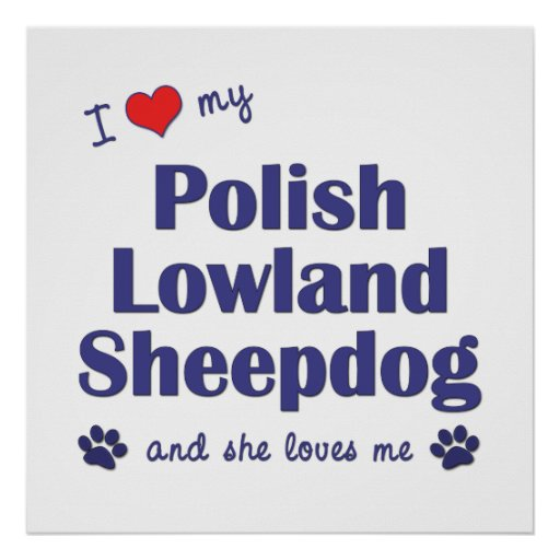 Amo mi perro pastor polaco de la tierra baja (el p impresiones