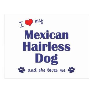 Amo mi perro sin pelo mexicano (el perro femenino) postales