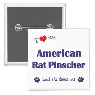 Amo mi Pinscher americano de la rata (el perro fem Pins