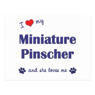 Amo mi Pinscher miniatura (el perro femenino) Postales