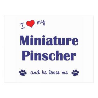 Amo mi Pinscher miniatura (el perro masculino) Tarjetas Postales