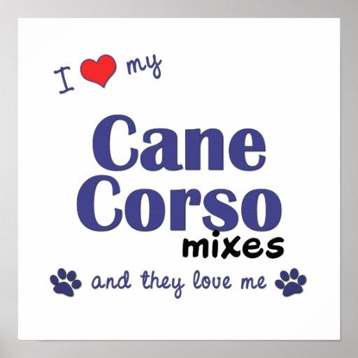 Amo mi poster de las mezclas de Corso del bastón (