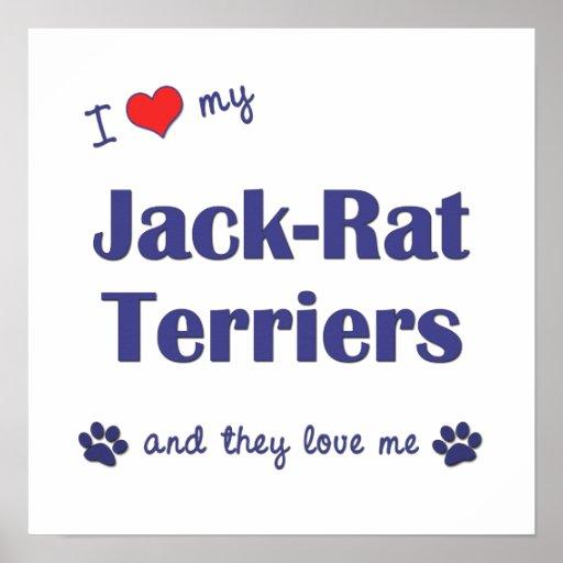 Amo mi poster de los terrieres de la Jack-Rata (pe