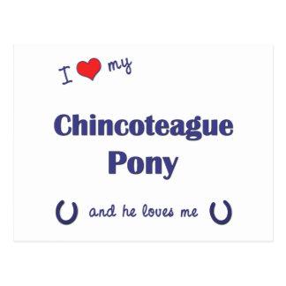 Amo mi potro de Chincoteague (el potro masculino) Tarjetas Postales