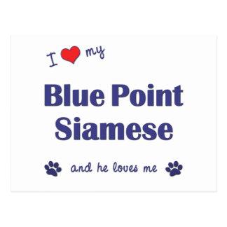 Amo mi punto azul siamés (el gato masculino) postales
