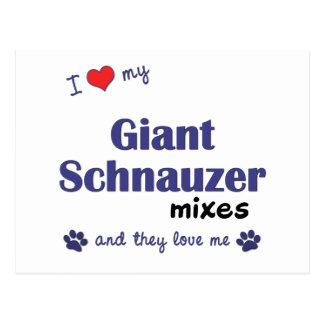 Amo mi Schnauzer gigante me mezclo los perros múl Tarjeta Postal