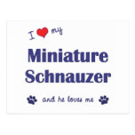 Amo mi Schnauzer miniatura (el perro masculino) Postal
