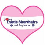 Amo mi Shorthairs exótico (los gatos múltiples) Esculturas Fotograficas